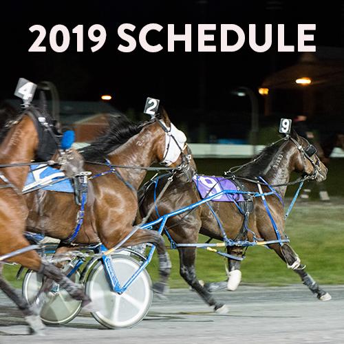 Horse Racing Schedule, Video, Results | Elements Casino